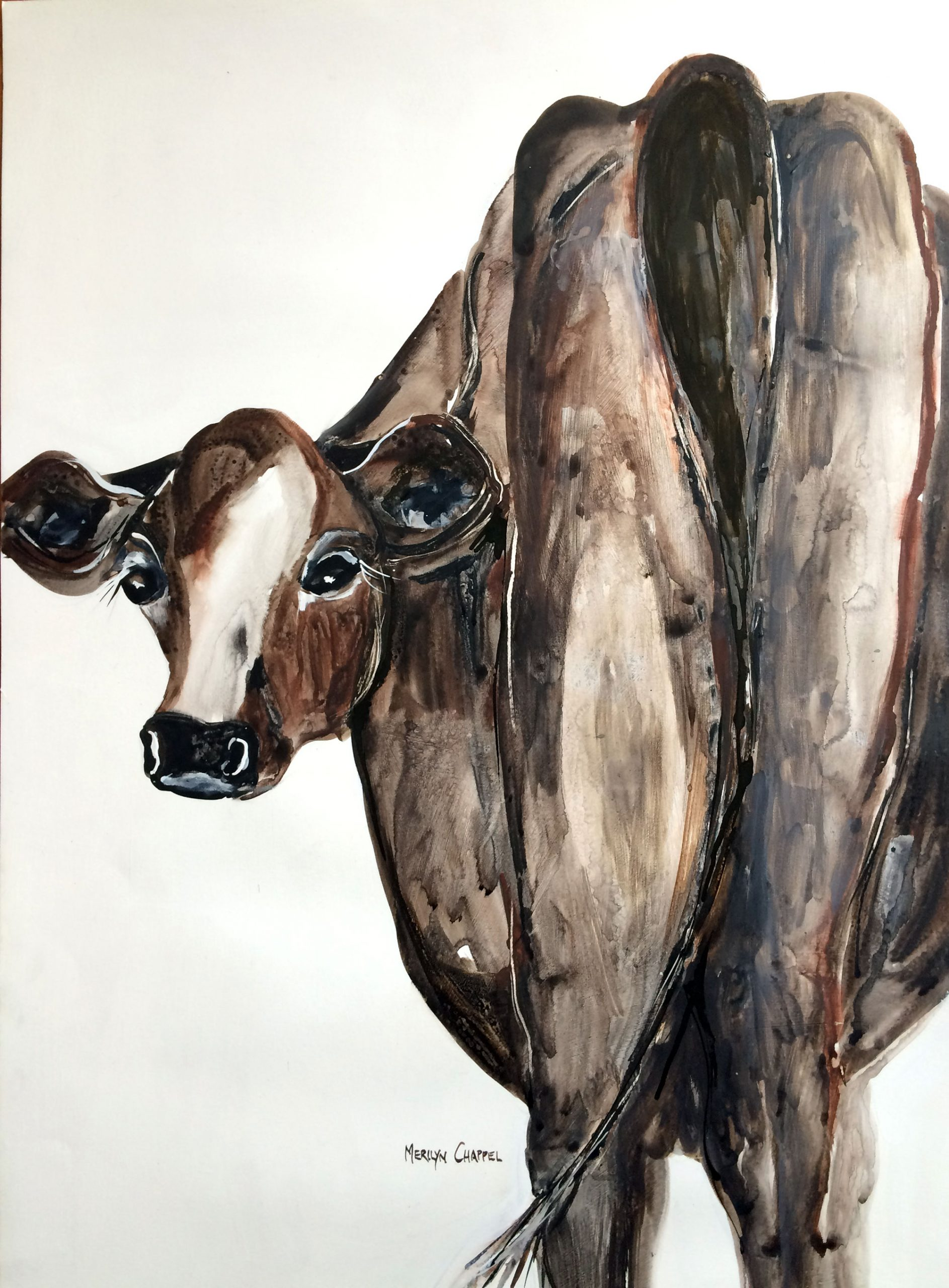 Jezabel-the-jersey-cow